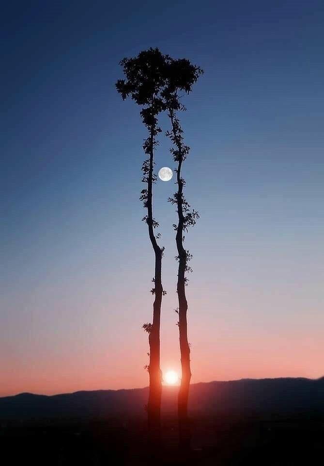 Cuando el Sol sale al encuentro de la Luna seduciéndola...Con poesía todo es eterno…
