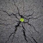 La «Terquedad» De La Vida…
