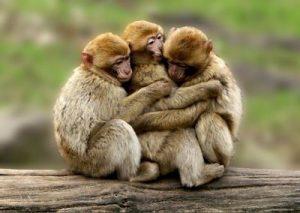 Un abrazo…