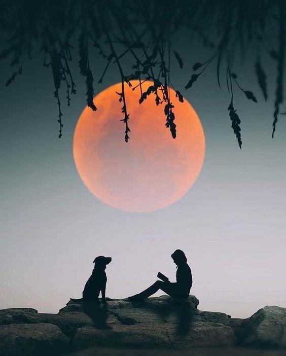 Pregúntale A La Luna... 1