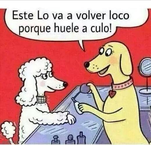 Hoy, Las Palabras Sobran...(Humor) 5