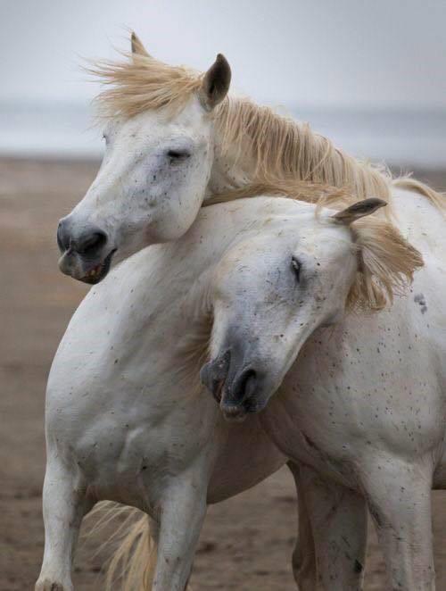 www.elrinconderovica.com en los abrazos se esconden todas las palabras mas bellas del mundo